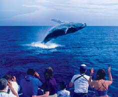 Image result for Hawaii Whale Watching